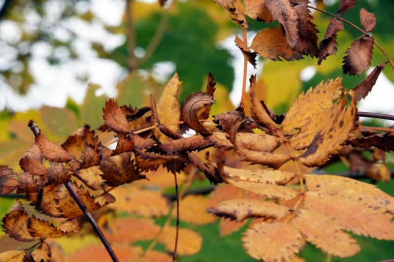 Das Sterben der Blätter